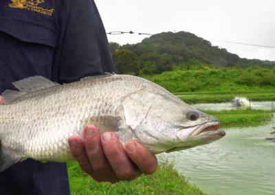 Australian-barramundi-holding-fish